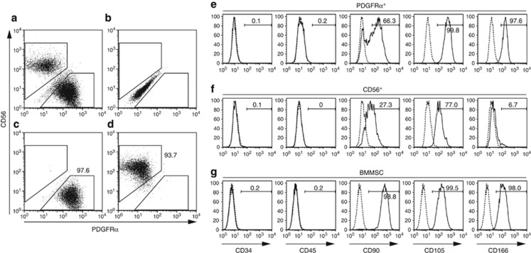 Flow cytometric analysis of PDGFR α + cells. ( a ) Human muscle-derived cells were analyzed for PDGFR α and CD56 expression. Representative data of 30 independent experiments are shown. ( b ) Positive gates were set by analyzing negative control samples stained with isotype control antibody or secondary reagent only. ( c ) Sorted PDGFR α + cells were reanalyzed for PDGFR α and CD56 expression. Consistent results were obtained from two independent experiments. ( d ) Sorted CD56 + cells were reanalyzed for PDGFR α and CD56 expression. Consistent results were obtained from two independent experiments. Expressions of indicated cell surface antigens, PDGFR α + cells ( e ), CD56 + cells ( f ), and bone marrow-derived mesenchymal stem cells (BMMSC, g ) were analyzed. Positive gates were set by analyzing negative control samples stained with isotype control antibody (dotted line). The percentages of each cell population are shown in the panels