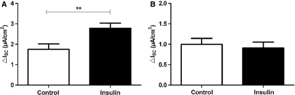 Insulin enhances benzamil‐sensitive I SC . Effects of insulin (200 nmol/L) on benzamil‐ and EIPA‐sensitive I SC of FDLE cell monolayers. (A) 10 μ mol/L benzamil ( n = 24 and 25, ** P