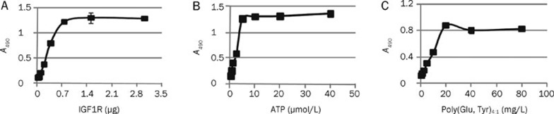 ELISA assays determining the phosphorylation of a synthetic peptide. (A) Plot of A 490 vs IGF1R quantity illustrating the relationship between substrate phosphorylation status and IGF1R level. (B) Plot of A 490 vs ATP concentration, and (C) Plot of A 490 vs concentration of synthetic substrate poly(Glu,Tyr) 4:1 , used to determine the optimal concentration of substrate in the screening model. Data shown were mean±SD from three independent experiments.