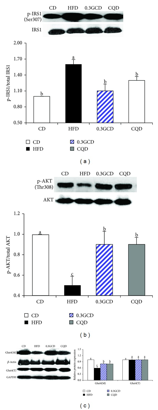 Effects of green coffee bean extract and 5-CQA supplementation on the proteins involved in <t>GLUT4</t> translocation in mice fed a HFD. Protein levels of p-IRS1, p-AKT, plasma membrane GLUT4, and corresponding total proteins in the epididymal adipose tissue were determined by Western blotting. Data represent the results of three independent experiments ( n = 2, 3 mice per experiment). P