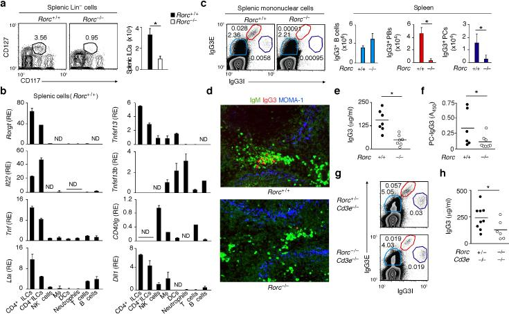 Mouse splenic ILCs express the plasma cell-helper factors APRIL and DLL1 and enhance TI IgG3 responses ( a ) Flow cytometric analysis of frequency and absolute numbers of splenic Lin – CD117 + CD127 + ILCs from Rorc +/+ ( n = 3) and Rorc –/– mice ( n = 3). ( b ) qRT-PCR of Rorc (RORγt) Il22 (IL-22) Tnf (TNF), Lta (LT-α), Tnfsf13 (APRIL), Tnfsf13b (BAFF), CD40lg (CD40L) and Dll1 (DLL1) mRNAs from splenic ILCs, macrophages (Mϕ), DCs, neutrophils, NK cells, T cells or B cells. Results are normalized to Gapdh (glyceraldehyde 3-phosphate dehydrogenase) mRNA and presented as relative expression (RE) compared to the expression level in NK cells. ( c ) Flow cytometric analysis of frequency and absolute numbers of splenic IgG3E + IgG3I lo B cells, IgG3E hi IgG3I + plasmablasts (PBs) and IgG3E + IgG3I hi plasma cells (PCs) from Rorc +/+ ( n = 3) and Rorc –/– mice. E, extracellular; I, intracellular. ( d ) IFA of IgM (green), IgG3 (red) and MOMA-1 (blue) in spleens from Rorc +/+ and Rorc –/– mice. Original magnification, ×20. ( e,f ) ELISA of total (e) and PC-reactive (f) serum IgG3 from Rorc +/+ ( n = 6-7) and Rorc –/– ( n = 7-8) mice. ( g ) Frequency of IgG3-expressing B cells, PBs and PCs from spleens of Rorc +/– Cd3e –/– and Rorc –/– Cd3e –/– mice. ( h ) Serum IgG3 from Rorc +/– Cd3e –/– ( n = 9) and Rorc –/– Cd3e –/– ( n = 6) mice. Error bars, s.e.m. (b), s.d. (a,c); * P