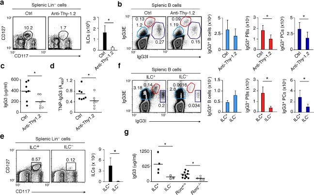 Mouse splenic ILCs help plasmablasts and plasma cells emerging from TI IgG3 responses ( a ) Flow cytometric analysis of frequency and absolute numbers of splenic Lin – CD117 + CD127 + ILCs from Thy-1-disparate chimeric Rag1 –/– mice treated with control (ctrl) ( n = 7) or anti-Thy.1.2 antibodies ( n = 7). ( b ) Frequency and absolute numbers of splenic IgG3E + IgG3I lo B cells, IgG3E hi IgG3I + plasmablasts (PBs) and IgG3E – IgG3I hi plasma cells (PCs) from Ctrl or ILC-depleted mice obtained as in (a). E, extracellular; I, intracellular. ( c,d ) ELISA of pre-immune total (c) and PC-reactive (d) serum IgG3 from Ctrl or ILC-depleted mice obtained as in (a). ( e , f ) Frequency and absolute numbers of splenic Lin – CD117 + CD127 + ILCs (e) and IgG3-expressing splenic B cells, PBs and PCs (f) from ILC + ( n = 3) or ILC – ( n = 3) bone marrow chimeric mice. ( g ) Pre-immune total serum IgG3 from ILC + ( n = 4) and ILC – ( n = 3) mice, age-matched Rorc +/+ mice ( n = 10), and Rorc –/– mice ( n = 5). Error bars, s.d.; * P