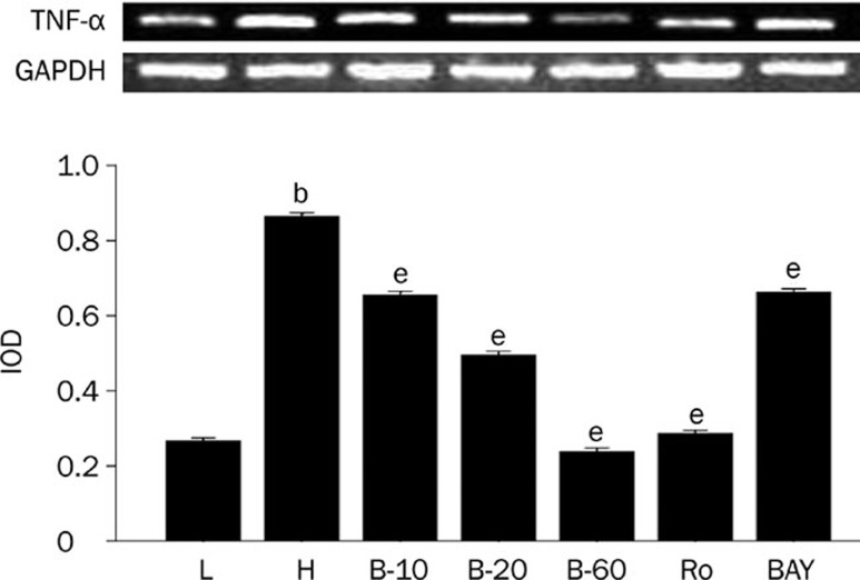 Breviscapine decreased the expression of TNF-α in high glucose cultured cardiomyocytes. Cardiomyocytes cultured in high glucose levels showed higher expression of TNF-α compared with control group. After adding PKC inhibitor Ro-31-8220 (50 nmol/L), NF-κB inhibitor BAY11-7082 (5 μmol/L) and breviscapine (10, 20, and 60 mmol/L), the expression of TNF-α decreased compared with the cardiomyocytes cultured in high glucose levels as shown in Figure 4 . The results were expressed as means±SEM. n =4 or 5. b P