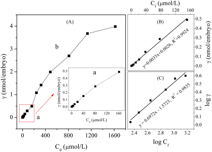 Binding number of diclofenac to the zebrafish embryo with C 0 increasing from 0.3–1620 μM. (A) a, partitioning stage; b, Freundlich adsorption stage; (B) Plot of γ vs C f ( C 0 from 0 to 162 μM); (C) Plot of log γ vs log C f ( C 0 from 162 to 1620 μM).