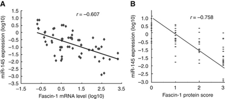 (A) Inverse correlation between miR-145 expression and Fascin-1 mRNA levels in CRC cell lines and tissues ( r =−0.607; P