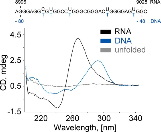 CD spectral analysis of the RNA and single stranded DNA with Sp1 binding sites in HIV-1. CD spectra indicate the formation of the parallel G-quadruplex for the RNA template and an antiparallel or hybrid G-quadruplex for single stranded DNA. For reference, a profile of the G-rich sequence (50% of Gs; GGGGGGAUUGUG UGGUACAGUGCAGAGA), which is unable to adopt G-quadruplex structure, is shown in gray.