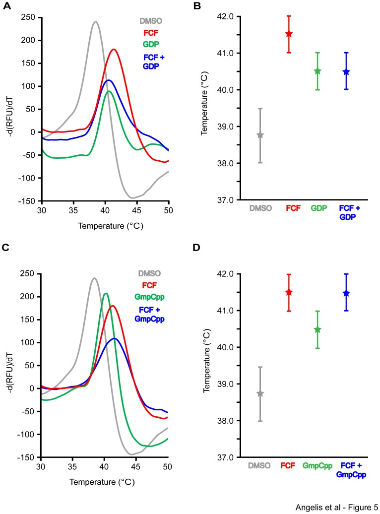 FCF does not affect the thermostability of SEPT2 dimers in the presence of GDP, but increases SEPT2 stability in the presence of <t>GmpCpp.</t> Recombinant His-tagged SEPT2 dimers were purified using size exclusion chromatography and SEPT2 dimer stability was assayed by differential scanning fluorimetry. (A and B) Curves show the negative first derivative of SYPRO ORANGE fluorescence plotted against temperature for SEPT2 dimers in the presence of <t>DMSO</t> (control), FCF (100 µM), GDP (100 µM), and FCF plus GDP (100 µM each). Plot (B) shows the median melting temperature of SEPT2 from three independent experiments. Error bars represent the highest and lowest values obtained from these experiments. (C and D) Curves show the negative first derivative of SYPRO ORANGE fluorescence plotted against temperature for SEPT2 dimers in the presence of DMSO (control), FCF (100 µM), GmpCpp (100 µM), and FCF plus CmpCpp (100 µM each). Plot (D) shows the median melting temperature of SEPT2 from three independent experiments. Error bars represent the highest and lowest values obtained from these independent experiments.