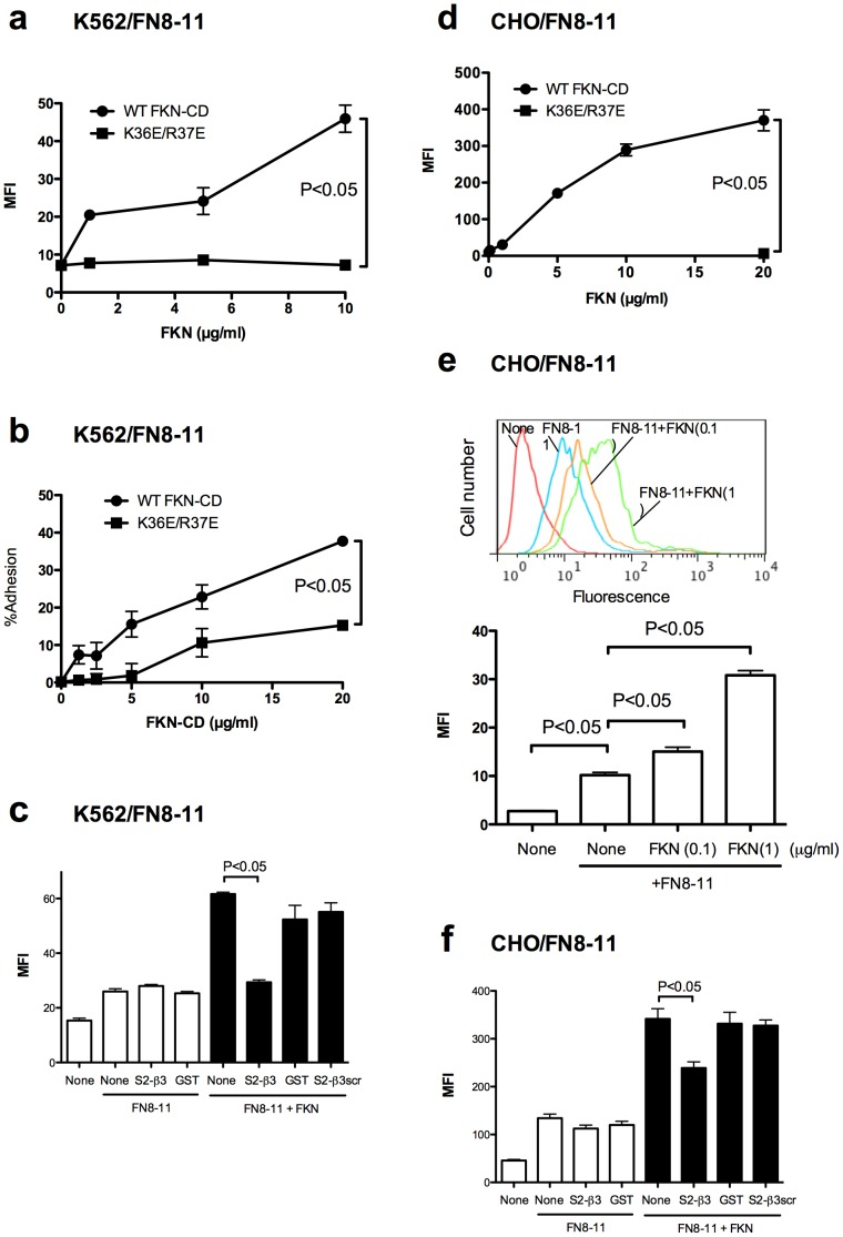 FKN-CD activates α5β1 integrin in a CX3CR1-independent manner through the binding to site 2. a. Activation of α5β1 by FKN-CD in K562 cells (CX3CR1-negative). The binding of FITC-labeled FN8-11 (specific ligand to α5β1) was measured as described in the methods. Data are shown as means ± SEM of MFI of three independent experiments. b. K562 cells adhesion to FN8-11. Cell adhesion to immobilized FN8-11 was measured as described in the methods. Data are shown as means ± SEM of three independent experiments. c. Effect of S2-β3 on FKN-CD induced integrin activation in K562 cells. Cells were incubated with FITC-labeled FN8-11 in the presence of FKN-CD or the mixtures of FKN-CD and S2-β3. FKN-CD (20 µg/ml) was preincubated with S2-β3 (300 µg/ml) in PBS for 30 min at room temperature. Binding of FITC-labeled FN8-11 to cells was measured by flow cytometry. Data are shown as means ± SEM of MFI of three independent experiments. d. Activation of α5β1 by FKN-CD in CHO cells (CX3CR1-negative) in a CX3CR1-independent manner. The binding of FITC-labeled FN8-11 (specific ligand to α5β1) was measured by flow cytometry. Data are shown as means ± SEM of MFI of three independent experiments. e. Activation of α5β1 by FKN-CD in CHO cells at low FKN-CD concentrations. Experiments were performed as described in (d) except that FKN-CD and K36E/R37E were used at 0.1 and 1 µg/ml. Data are shown as means ± SEM of MFI of three independent experiments. f. Effect of S2-β3 peptide on FKN-CD induced integrin activation in CHO cells. Experiments were performed as descibed in c) except that CHO cells were used. Data are shown as means ± SEM of MFI of three independent experiments.