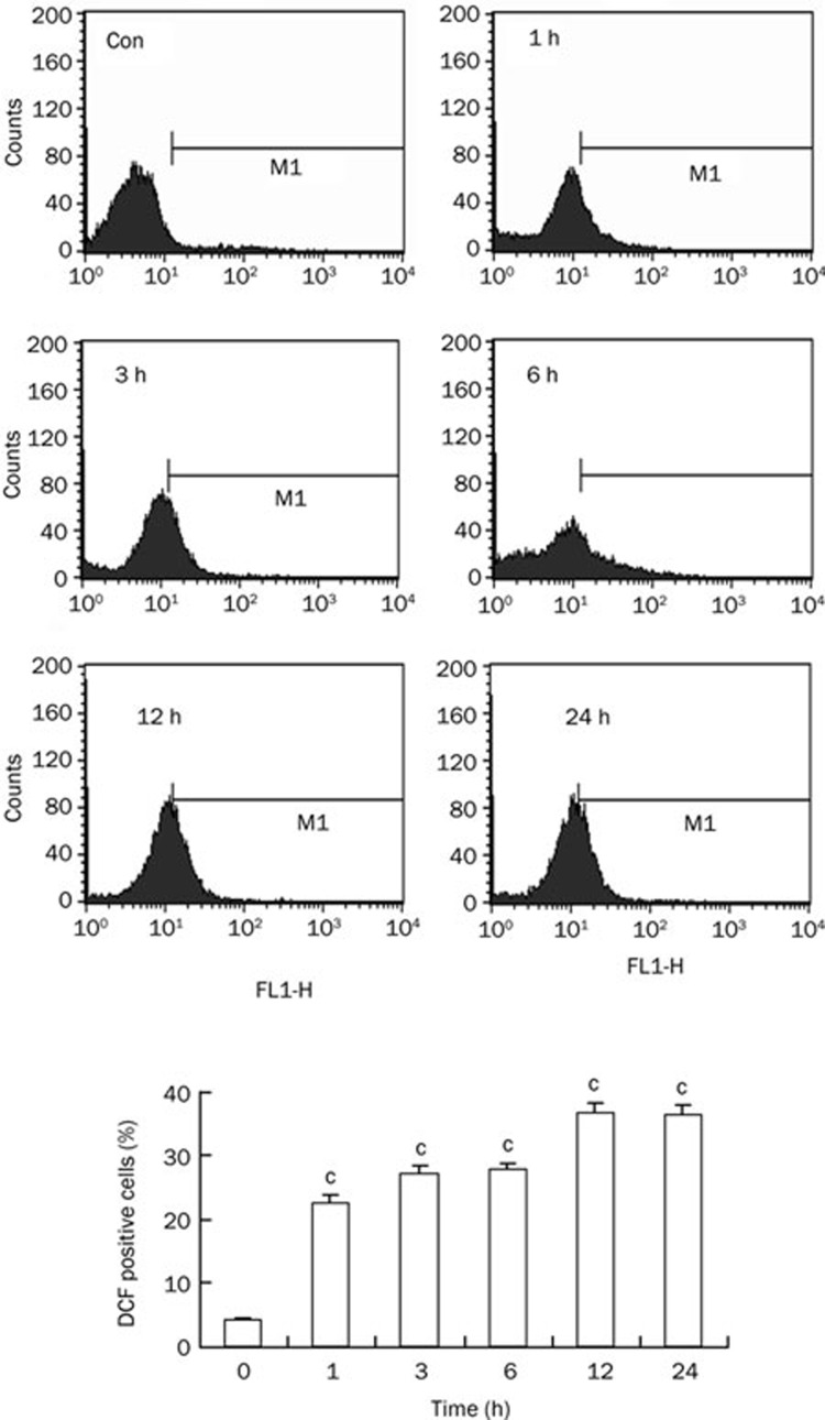 Persistent ROS generation was induced by oridonin in HeLa cells. The cells were treated with 80 μmol/L oridonin for 1, 3, 6, 12, and 24 h, and the DCF-positive cells were measured by flow cytometric analysis. The corresponding linear diagram of the FACScan histograms was expressed at the bottom. n =3. Mean±SD. c P