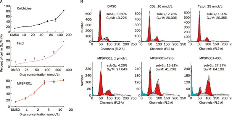 Synergistic effects of MPSP-001 in combination with colchicine and Taxol on blocking mitosis. (A) Flow cytometry analysis of the mitosis block effects using different concentrations of MPSP-001, colchicines and Taxol. HeLa cells were incubated with different concentrations of MPSP-001, colchicines and taxol for 16 h. Then cells were fixed and stained with PI and analyzed by flow cytometry. The G 2 /M distribution values were graphed. Data are the means of triplicates±SD. (B) Flow cytometry analysis of the effects of taxol (25 nmol/L), colchicine (10 nmol/L), MPSP-001 (1 μmol/L) or the combination of Taxol+MPSP-001 and colchicines+MPSP-001 on cell cycle distribution. HeLa cells were incubated with drugs for 16 h. The cells were then fixed and stained with PI and analyzed by flow cytometry.