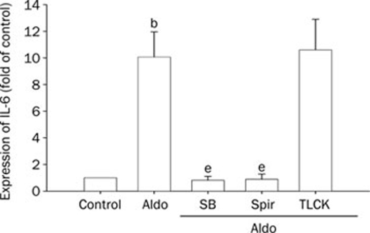 The expression of IL-6 in VSMCs induced by aldosterone (Aldo). The cells were pretreated with SB203580 (SB, 20 μmol/L), spironolactone (Spir, 50 μmol/L) and TLCK (100 μmol/L) for 1 h, then stimulated with Aldo (0.1 μmol/L) for 7 h. The cell lysates were analysed by real time RT-PCR. Mean±SD. n =3. b P