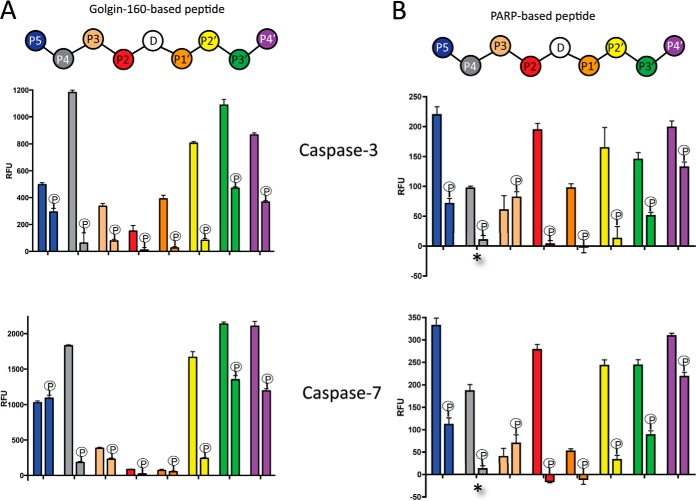 Relative activities of caspase-3 and caspase-7 with model and phosphopeptides containing serine residues positioned within the P5–P4′ consensus motif for caspase cleavage. Caspase cleavage of peptide substrates was measured using fluorescence of an internally quenched tryptophan residue at 355 nm after excitation at 280 nm. Peptides or phosphopeptides modeled after Golgin-160 ( A ) and PARP1 ( B ) were assayed with caspase-3 or caspase-7 for 10 min at 37 °C and stopped by an excess of the irreversible caspase inhibitor zVAD-fmk. Error bars represent the standard deviation of four reactions. A , means of the caspase activities toward phosphorylated peptides and their nonphosphorylated counterparts were compared using analysis of variance and Tukey's test. For caspase-3, P4, P3, P1′, P2′, P3′, and P4′ phosphopeptide versus nonphosphorylated peptide pairs had p values