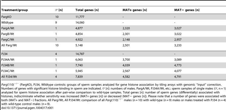 """Aberrant chromatin composition in mouse models of altered PAR metabolism. Chromomycin A3 (CMA3) intercalation into the DNA indicates incomplete chromatin condensation in s perm from <t>Parg</t> (110) −/− (A) and PJ34-treated (C) males with histone retention. (B, D) Histogram of sperm CMA3-staining intensities reflects that severity of CM3A staining varied at the level of individual sperm and individual fathers (n > 200 nuclei/sample, 3 males/group). (E) Immunoblot analyses of sperm protein lysates showing increase in histone retention in PJ34 treated males. TUBA1A: alpha tubulin loading control. (F) Overlaps of genes identified as differentially histone associated in sperm from 3 individual Parg (110) −/− males (""""PargA"""", """"PargB"""", """"PargC"""", the fathers of the embryos analyzed below) by micrococcal nuclease digests (MND) compared to the wild-type controls. The """"PargAll"""" data set contains all genes commonly identified as differentially <t>MNase-sensitive</t> across 10 Parg (110) −/− males compared with 9 wild-type control animals. The red circle indicates common genes that were differentially histone associated in all groups (1604+216 = 1820, red circle) compared with wild-type. (G) PJ34: differentially MNase-sensitive genes in three different males (like in E) and overlap with a surrogate dataset (""""PJ34All"""") consisting of data from all 4 PJ34-treated males compared with 9 wild-type control males. The overlap of 2,489 genes that were commonly differentially histone associated in sperm samples is indicated (blue circle). (H) Overlap of genes commonly affected by differential histone association between the Parg (110) −/− and the PJ34 models compared to wild-type controls (red and blue circles in F and G). A Pearson correlation examining significance of this overlap using a genetic background of 19,472 genes was calculated with a resulting P"""