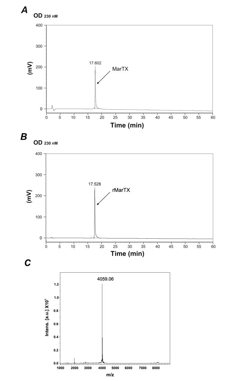 RP-HPLC chromatography and mass spectra of rMarTX. ( A ) RP-HPLC chromatography of native MarTX on a C18 column using a linear gradient of 5%–95% acetonitrile with 0.1% trifluoroacetic acid (TFA) in 60 min at a constant flow rate of 1 mL/min, and detected at 230 nm; ( B ) RP-HPLC chromatography of rMarTX under the same condition; ( C ) Mass spectra of purified rMarTX. The calculated theoretical molecular weight of rMarTX was 4060 Da [ 17 ] and the measured molecular weight was 4059.06 Da.