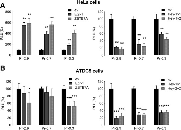 Effects of Egr - 1, Hey - 1 and ZBTB7A / LRF / pokemon on ACVR 1 promoter activity. Expression vectors carrying the cDNA of Egr-1, Hey-1 or ZBTB7A/LRF/pokemon transcription factors were transiently transfected in the HeLa (A) and ATDC5 (B) cell lines together with the three reporter ACVR1 promoter deletion constructs (Pr-2.9, Pr-0.7 and Pr-0.3) and the pRL-TK-Renilla plasmid as control for transfection efficiency. Detected activities are expressed relative to those of the same promoter construct co-transfected with empty expression vector considered as 100% (RLU, Relative Light Unit). The data represent the mean ± SD (error bars) of independent experiments (n=2 in HeLa cells, n=3 in ATDC5 cells) carried out in triplicate with p