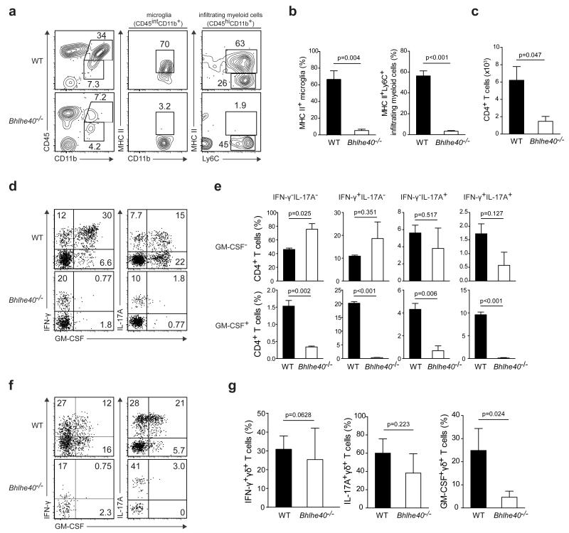 Diminished neuroinflammation in Bhlhe40 −/− mice a , Flow cytometry of CNS myeloid cells from WT and Bhlhe40 −/− mice (n=3 per group) on day 16 after immunization. b, Percentage of MHC class II + microglia and infiltrating myeloid cells. c-e , Flow cytometry of CD4 + T cells in the CNS of WT and Bhlhe40 −/− mice (n=3 per group) on day 16 after immunization. ( c ) CD4 + T cell number. ( d ) Representative ICS for the indicated <t>cytokines.</t> ( e ) Frequency of CD4 + T cells secreting each of the indicated 8 possible combinations of GM-CSF, IL-17A, and IFN-γ. f, g , Flow cytometry of γδ T cells in the CNS of WT and Bhlhe40 −/− mice (n=3per group) on day 14 after immunization. ( f ) Representative ICS for IFN-γ, IL-17A, and GM-CSF. ( g ) Frequency of γδ T cells secreting IFN-γ, IL-17A, or GM-CSF.