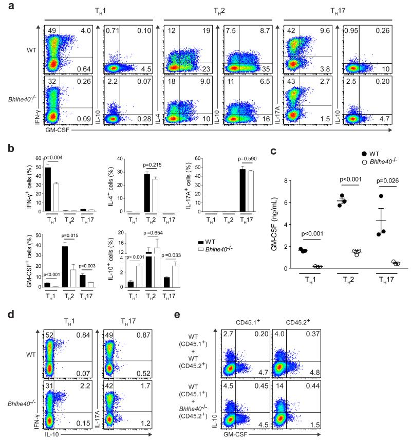 T H cells require Bhlhe40 for normal cytokine production in vitro a-d, CD4 + T cells from WT and Bhlhe40 −/− mice (n=3 per group) were polarized in T H 1, T H 2, or T H 17 culture conditions for 4 days. ( a ) Representative ICS for the indicated cytokines. ( b ) Frequencies of IFN-γ + , IL-4 + , IL-17A + , GM-CSF + , and IL-10 + cells in T H 1, T H 2, and T H 17 cultures. ( c ) T H 1, T H 2, and T H 17 cells were stimulated for 24 hours with anti-CD3 and anti-CD28. GM-CSF was measured in the supernatant by ELISA. ( d ) Representative ICS for the indicated cytokines. e , CD4 + T cells from the indicated congenic mice were mixed prior to culturing in non-polarizing conditions for 4 days, followed by ICS. Cells were gated based on their expression of CD45.1 or CD45.2. Representative ICS for IL-10 and GM-CSF is shown.