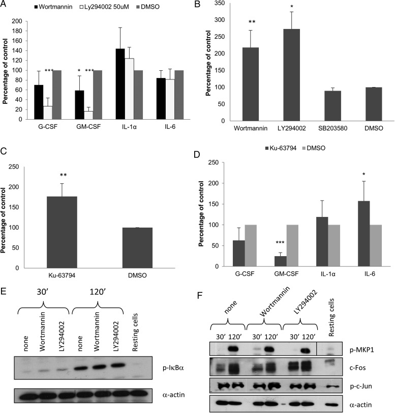 Inhibition of PI3K/Akt/mammalian target of rapamycin (mTOR) signaling induction in TR146 cells infected with Candida albicans. A , Effect of inhibition of PI3K/Akt signaling by 1 µM wortmannin or 50 µM LY294002 on cytokine production after 24 hours (multiplicity of infection [MOI] = 0.01) shown as percentage of the dimethyl sulfoxide (DMSO) vehicle control. B , Effect of inhibition of PI3K/Akt (wortmannin [1 µM] and LY294002 [50 µM]) or p38 (SB203580 [10 µM]) signaling on cell damage (lactate dehydrogenase [LDH] release) after 24 hours (MOI = 0.01) shown as percentage of the vehicle control (DMSO). C , Effect of inhibition of mTOR activity with 10 μM <t>Ku-63794</t> on cell damage (LDH release) after 24 hours (MOI] = 0.01) shown as percentage of DMSO vehicle control. D , Effect of inhibition of mTOR activity with 10 μM Ku-63794 on cytokine production after 24 hours (MOI = 0.01) shown as percentage of the vehicle control (DMSO). E , Effect of inhibition of PI3K/Akt signaling by 1 µM wortmannin or 50 µM LY294002 on phosphorylation of IκBα 2 hours postinfection (MOI = 10). F , Effect of inhibition of PI3K/Akt signaling by 1 µM wortmannin or 50 µM LY294002 on phosphorylation of MKP1 and c-Jun and on the production of c-Fos 2 hours postinfection (MOI = 10). Candida albicans was added as 100% yeast, which switched to hyphal growth by 2 hours postinfection. Data are the mean ( A – D ) or representative ( E and F ) of at least 3 independent experiments. * P