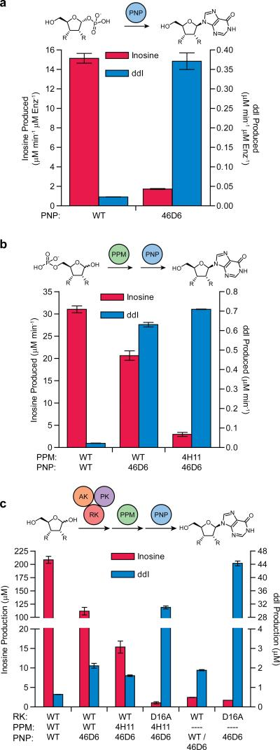Selectivity and activity changes in selected variant enzymes as assessed using coupled assays Nucleoside production was measured via <t>HPLC/MS</t> analysis ( a ) from in situ generated sugar 1-phosphates in one step biocatalysis (PNP only), ( b ) from sugar 5-phosphates in the two-step tandem pathway (PPM and PNP) or ( c ) from ribose or <t>dideoxyribose</t> in the full biosynthetic pathway (RK, PPM and PNP) or the pathway without PPM. Enzyme variants used in each reaction are listed under bars (dashed line means no variant included). Direct phosphorylation of the sugar C1 position by wild-type RK in panel ( c , second from right) was tested in tandem with wild-type PNP for inosine production and PNP-46D6 for didanosine production to allow the best detection of activity. Turnover in panel ( a ) was normalized to PNP variant concentration and assay length. Production in panel ( b ) was normalized to incubation time. The full inosine pathway in ( c ) was incubated for 5 min, while didanosine production was for 10 h. Reactions in ( c ) without PPM were incubated for 10 h, however inosine production was normalized to 5 min to be directly comparable to production by the full pathway with PPM. Data are mean ± s.d. (n=2).