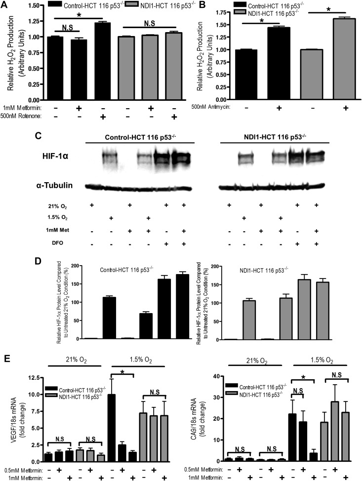 Metformin reduces HIF-1 activation through inhibition of mitochondrial complex I. ( A and B ) H 2 O 2 levels emitted by mitochondria isolated from Control-HCT 116 p53 −/− and NDI1-HCT 116 p53 −/− cells respiring on 2 mM malate and 10 mM pyruvate. Mitochondria were treated with 1 mM Metformin, 500 nM rotenone, 500 nM Antimycin, or left untreated. H 2 O 2 levels were measured using Amplex Red. ( C ) Levels of HIF1α protein in Control-HCT 116 p53 −/− and NDI1-HCT 116 p53 −/− cells treated with 0 or 1 mM metformin for 24 hr, then placed in normoxia (21% O 2 ), hypoxia (1.5% O 2 ) or treated with Deferoxamine (DFO) for 8 hr. ( D ) Quantification of HIF1α protein levels from panel C . ( E ) Hypoxic-induced expression of HIF target genes in Control-HCT 116 p53 −/− and NDI1-HCT 116 p53 −/− treated with 0, 0.5 mM or 1 mM metformin for 24 hr following treatment with normoxia or hypoxia for 16 hr. Error bars are SEM (n = 3 for Amplex Red; Blot is representative of four independent blots quantified in D , n = 4 for gene expression). * indicates significance p