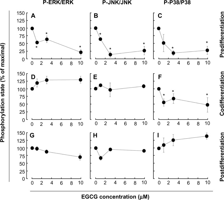 EGCG pretreatment of promyelocytic HL-60 inhibits S1P response in macrophage-differentiated HL-60 cells. Notes: Three different conditions were used to evaluate the EGCG impact on the S1P response. Predifferentiation conditions: serum-starved HL-60 cells were treated for 24 hours with various concentrations of EGCG (0–10 μM), then treated for 18 hours with 3 μM PMA, to induce HL-60 cell differentiation and adhesion ( A – C ). Codifferentiation conditions: serum-starved HL-60 cells were treated for 18 hours with either 3 μM PMA alone or with a combination of 3 μM PMA and various EGCG concentrations ( D – F ). Postdifferentiation conditions: serum-starved HL-60 cells were treated for 18 hours with 3 μM PMA, then adherent cells were treated for 24 hours with various EGCG concentrations ( G – I ). In all three conditions, adherent cells were then treated with 1 μM S1P for 30 seconds, then cell lysates were isolated, electrophoresed via SDS-PAGE, and immunodetection performed. Scanning densitometry of the autoradiograms was performed, and ratios of P-ERK/ERK, <t>P-JNK/JNK,</t> and P-P38/P38 were obtained. The data shown is representative of three independent experiments. Abbreviations: EGCG, epigallocatechin-3-gallate; ERK, extracellular signal-regulated kinase; JNK, c-Jun N-terminal kinase; HL, human leukemia; P-P38, phosphorylated P38; P-ERK, phosphorylated ERK; P-JNK, phosphorylated JNK; PMA, phorbol-12-myristate-13-acetate; SDS-PAGE, sodium dodecyl sulfate–polyacrylamide gel electrophoresis; S1P, sphingosine-1-phosphate.