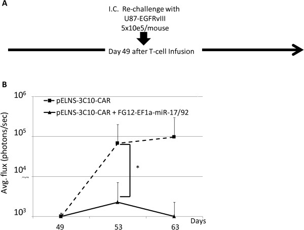 Ectopic expression miR-17-92 in CAR-T cells confers improved protection following tumor re-challenge. (A) Schematic of the experimental protocol. CAR-T-cell-treated mice that survived at least for 35 days in the experiment shown in Figure 4 [4 mice receiving 3C10-T-cells without miR and 3 mice treated with T-cells co-transduced with 3C10 plus miR-17-92] received i.c. re-challenge with U87-EGFRvIII-Luc cells (5×10 5 /mice) on day 49. No additional CAR T-cells were injected. (B) Longitudinal measurements of tumor-derived mean photon flux ± SD from the 2 groups of mice. The background luminescence level (up to 10 3 p/s) was defined based on the levels observed in non-tumor-bearing mice imaged in parallel with tumor-bearing mice in treatment groups. *p