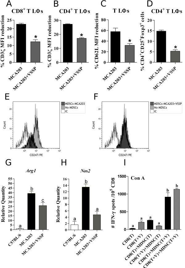 Suppressive mechanisms of MDSCs are dampened by VSSP. Mice were treated as described in Figure 2 . FACS analyses of the down-regulation of CD3ζ chain on CD8 + (A) and CD4 + (B) T cells, as well as CD62L on T cells (C) , were performed in splenocytes from five individual mice per group. Data were normalized by the percentage of MDSCs in each mouse. The reduction in Tregs frequency caused by VSSP was further corroborated and resulted more obvious after the normalization procedure (D) . Statistical comparisons between groups were done with Student's t test for CD62L expression and Tregs percentages, whereas Mann-Whitney's U test was used to analyze down-regulation of CD3ζ chain. (E-F) MDSCs immunomagnetically enriched from the spleens of VSSP-injected or untreated MCA203 TB mice were cultured at 20% with splenocytes from OTI transgenic mice, in the presence of relevant peptide. Histograms show the expression of CD3ζ chain on CD8 + T cells specifically stimulated with SIINFEKL peptide in the presence or absence of MDSCs. Further characterization of MDSCs isolated from each experimental group was done by RT-PCR and the reduction of Arg1 (G) and Nos 2 (H) gene expression is represented in bar graphs. Three replicates of CD11b + Gr1 + cells isolated from pools of three mice per group were included in the RT-PCR analysis. (I) The capacity of MDSCs to behave as APCs during Con A-stimulated IFN-γ production by CD8 + T cells was measured through ELISPOT assay. CD8 + T cells and CD11b + Gr1 + cells were isolated from TB mice, either treated or not with the adjuvant, and cocultured for 72 h in the presence of Con A mitogen. Graph indicates the mean ± SD of the number of IFN-γ spots per 10 5 CD8 + T cells from one experiment representative of two (T: tumor and V: VSSP). (G-I) The multiple comparisons of mean values were executed with ANOVA and Tukey's tests.