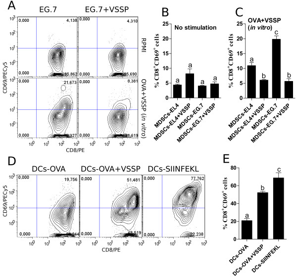 Tolerogenic MDSCs incubated with VSSP are conditioned to cross-prime antigen-specific CD8 + T cells. CD11b + Gr1 + cells isolated from EL4 and EG.7 TB mice, inoculated or not with VSSP, were treated in vitro with 10 μg/mL of both OVA and VSSP (A and C) or left untreated (A and B) . To assess the capacity of these cells to accomplish a detectable cross-priming, antigen-specific CD8 + T cells were isolated from OTI transgenic mice and cocultured at 1:1 ratio with MDSCs for 96 h. BM-DCs previously incubated with OVA, OVA and VSSP or pulsed with SIINFEKL peptide were used as controls (D and E) . Graphs show the percentage of CD69 + cells as a measure of the activation of antigen-specific CD8 + T cells. ANOVA and Tukey's tests were used for statistical comparison of the groups' mean. Two experiments with similar results were performed.