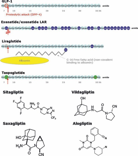 Amino acid sequence of glucagon‐like peptide‐1 and peptide GLP‐1 receptor agonists exenatide, liraglutide, and taspoglutide and chemical structures of the dipeptidyl peptidase‐4 inhibitors sitagliptin, vildagliptin, saxagliptin, and alogliptin.
