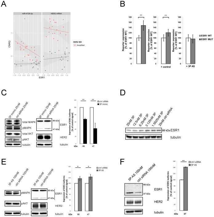miR-4728-3p IS regulates ESR1. A. qRT-PCR analysis of ESR1 and HER2 transcripts and miR-4728-3p among a panel of 38 breast cancer tumors (19 HER2+, 19 HER2-). Calibrated Normalized Relative Quantity (CNRQ) of miR-4728-3p (left) and HER2 (right) is plotted against expression levels of ESR1. Tumors classified as HER2+ by ISH are shown in red, HER2- in grey. Expression was normalized to a panel of reference genes. For details see text and material and methods. B. Luciferase assay in BT-474 with ESR1 3′UTR constructs carrying either wild type target site of miR-4728-3p internal seed (WT) or mutated internal seed site (MUT). Firefly luciferase activity was normalized against Renilla luciferase. Reporter activity is given as % of WT in respective experiment. Repression of WT ESR1 construct by endogenous miR-4728-3p (left) is alleviated by an <t>antisense</t> oligo (AS) against endogenous miRNA (right) but not by a non-targeting control (middle). C. Western blot (left) and protein quantification (right) of ESR1 in MCF7. The two main isoforms of ESR1 (47 and 66 kDa), plotted as percentage of control signal of matching size, are down regulated upon transfection of miR-4728-3p mimics. Levels of HER2, (p)MAPK and (p)AKT remain largely unchanged. D. MCF7 cells were transfected with indicated concentrations of miR-4728-3p mimic. ESR1 levels show a concentration-dependent down-regulation that is most pronounced at highest tested concentration (25 nM). E. Western blot (left) and protein quantification (right) of ESR1 in BT474. ESR1 is up regulated when blocking endogenous miR-4728-3p with AS-oligonucleotides, while pMAPK and pAKT remain largely unchanged. F. Western blot (left) and protein quantification (right) of ESR1 in HCC1954 cells. ESR1 isoform of 47 kDa is up regulated under miR-4728-3p blocking. The main 66 kDa isoform is not detectable in this ER- cell line. Signals were quantified with ImageJ and normalized to total protein by Coomassie stain. Tubulin was used as a loadi