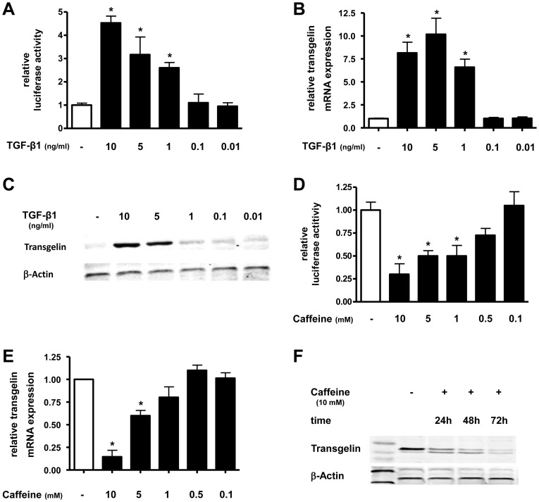 TGF-β1 increases and caffeine decreases transgelin expression in lung epithelial cells. A549 cells were incubated with TGF-β1 (A–C) or caffeine (D–F) in indicated concentrations and for various timepoints. Transgelin promoter (A+C), real-time PCR (B+E) and Western blot (C+F) analysis was performed. Means±SD of at least n = 3 independent experiments are shown. In C+F representative immunoblots of at least three independent experiments are shown. * p