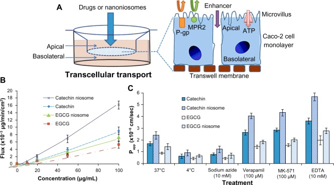 Transport of catechin, EGCG, and their niosomes by human intestinal Caco-2 cells. Notes: Schematic diagram of transcellular transport and different transporters in Caco-2 cells ( A ); effect of concentration on the flux of catechin, EGCG, and their niosomes (0, 10, 20, 50, and 100 μg/mL) through Caco-2 monolayer from apical to basolateral chamber ( B ); effect of temperature (4°C and 37°C), ATP inhibitor (sodium azide), P-gp inhibitor (verapamil), MRP2 inhibitor (MK-571) and absorption enhancer <t>(EDTA)</t> on transport of 100 μg/mL different drugs after 6 hours ( C ). Data are presented as mean ± SD (n=3). Abbreviations: EDTA, <t>ethylenediaminetetraacetic</t> acid; EGCG, (−)-epigallocatechin gallate; MRP2, multidrug resistance-associated protein 2; P-gp, permeability glycoprotein; SD, standard deviation.