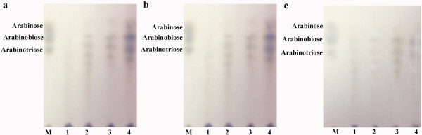Analysis of linear <t>arabinan</t> and debranched arabinan hydrolyzed by Tth Abn endo-arabinanase. The products of the reaction were examined with TLC. M: arabinose, arabinobiose and arabinotriose. a . Lane 1, 2, 3, 4: linear arabinan samples (2%, wt/vol) incubated with 1 μg Tth Abn endo-arabinanase for 0.5 h, 1 h, 2 h and 3 h. respectively. b . Lane 1, 2, 3, 4: debranched arabinan samples (2%, wt/vol) incubated with 1 μg Tth Abn endo-arabinanase for 0.5 h, 1 h, 2 h and 3 h, respectively. c . Lane 1, 2, 3, 4: sugar beet arabinan samples (2%, wt/vol) incubated with 1 μg Tth Abn endo-arabinanase for 0.5 h, 1 h, 2 h and 3 h, respectively.