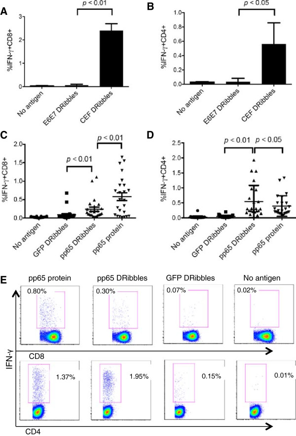 DRibbles were efficient antigen carriers for the activation of human CD8 + T cells and CD4 + T cells. PBMCs were separated according to their density into monocytes and lymphocytes by Elutra apheresis. DRibbles were collected from HEK 293 T cells that expressed E6E7 protein or CEF protein. Monocytes were loaded with 25ug/ml CEF DRibbles or 25ug/ml control E6E7 DRibbles. After 6 hours, lymphocytes were added. Activation of T cells was assessed by determining the percentage of IFN-γ + CD8 + cells (A) and IFN-γ + CD4 + cells (B) detected by ICS. The mean ± SEM of 3 separate experiments from the same donor are shown. CD8 + (C) and CD4 + T cell responses (D) against <t>UbiLT3</t> pp65 DRibbles or control UbiLT3 <t>GFP</t> DRibbles and CMV pp65 protein were analyzed in frozen-thawed PBMCs from 24 subjects. (E) shows the representative dot plot from one of the donors.