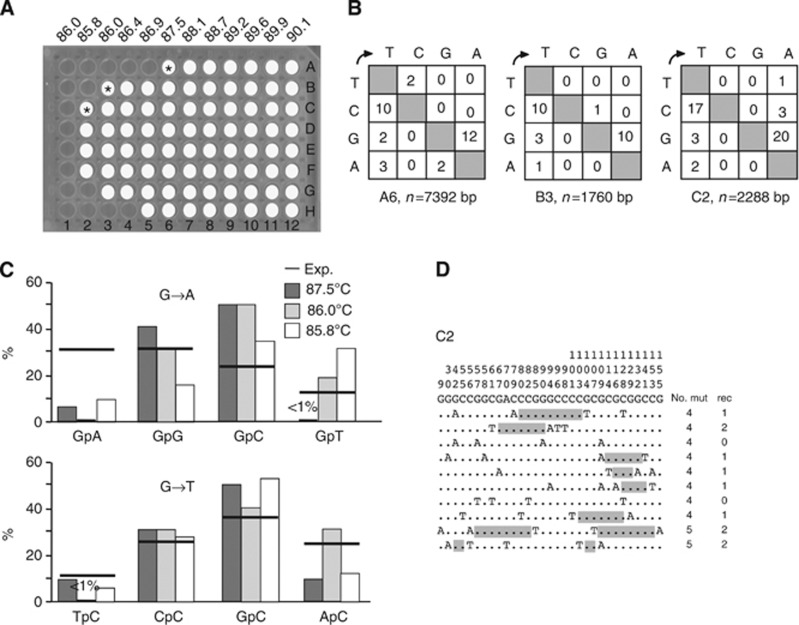 Variation in 3DPCR long-range Taq polymerase background mutation rate across the PCR block. ( A ) White spots correspond to PCR-positive samples for TP53 DNA. Those samples indicated by an asterisk were cloned and sequenced. ( B ) Mutation matrices for A6-, B3- and C2-derived sequences; transitions were invariably of the type N- > T,A; the number of bases sequenced is given by n. ( C ) 5′ Dinucleotide context for the G- > A and C- > T transitions, with the expected values shown as horizontal bars. ( D ) A collection of the most highly mutated sequences. To compact the data, only variable sites are shown, their positions being identified above. Nucleotide positions should be read from top to bottom. To the right are the numbers of mutations per clone (mut) and the minimum number of recombination events (rec) to explain the complexity. Zones of recombination are highlighted in grey shading when possible.
