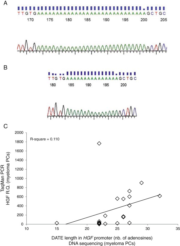 Characterization of DATE in the HGF gene promoter region. (A) and (B) Representative DNA sequencing traces of patients MM 14 and MM 22 with DATEs of 29 and 15 nucleotides, respectively. DATEs of individual patients were amplified by nested PCR, cloned into TA cloning vector pCR2.1 and sequenced using M13 standard primers. (C) HGF mRNA levels in CD138 + cells are plotted against the number of nucleotides present in DATE of the corresponding samples. CD138 + cells purified from bone marrow of myeloma patients were used to quantify HGF mRNA levels by real-time PCR. Corresponding samples were used to isolate genomic DNA for sequencing of DATE in the HGF promoter region. Data shown are HGF mRNA mean fold change ± standard deviation and the number of nucleotides quantified by sequencing.