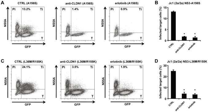 HTEIs effectively block cell-cell transmission of DAA-resistant viruses. The experimental setup is shown in Figure 1C . NS5A + HCV producer cells (Pi) were transfected with HCV RNA encoding for HCV Jc1 NS3-A156S (A-B) or Jc1 NS3-L36M/R155K (C–D). NS5A+ HCV producer cells and GFP-expressing target cells (T) were co-cultivated with nAb (anti-HCV IgG, 25 µg/mL) to block cell-free transmission as described [6] . Cell-cell transmission of wild-type or drug-resistant strains was determined by quantification of GFP + NS5A + target cells (Ti) by flow cytometry. Protease or NS5A inhibitor-resistant HCV variant producer cells (Pi) cultured with uninfected target cells (T) were then incubated with 1 µg/mL of CLDN1-specific mAb or 10 µM of erlotinib or control medium. HCV-infected target cells (GFP + NS5A + ) were quantified by flow cytometry (A and C). Percentage of infected target cells is shown as histograms (B and D) and is represented as means ± SD from three experiments performed in triplicate. * p