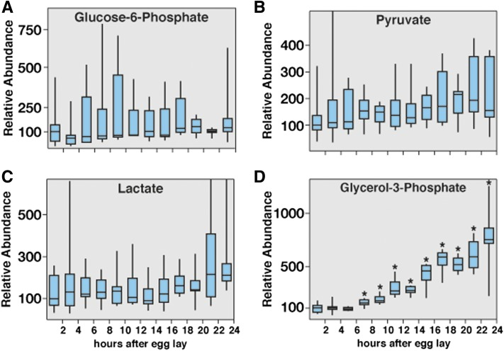 Metabolomic <t>analysis</t> of glycolysis in w 1118 embryos. Small-molecule <t>GC-MS</t> was used to analyze the relative abundance of metabolites related to glycolysis. (A) Although glucose-6-phosphate concentrations exhibited significant fluctuation, the median value remained nearly constant throughout embryogenesis. (B, C) Both pyruvate and lactate levels increase gradually as embryogenesis progresses, although these changes are not significant. (D) Embryos exhibit a nearly 10-fold increase in glycerol-3-phosphate levels. All data are graphically represented as a box plot, with the box representing the first and third quartiles, the median represented as the horizontal line within the box, and the bars representing the maximum and minimum points. Values are relative to the median of the 0- to 2-hr sample, which was normalized to 100; n > 6 independent samples for each time point. Each sample contains 300 staged and hand-sorted embryos. * P