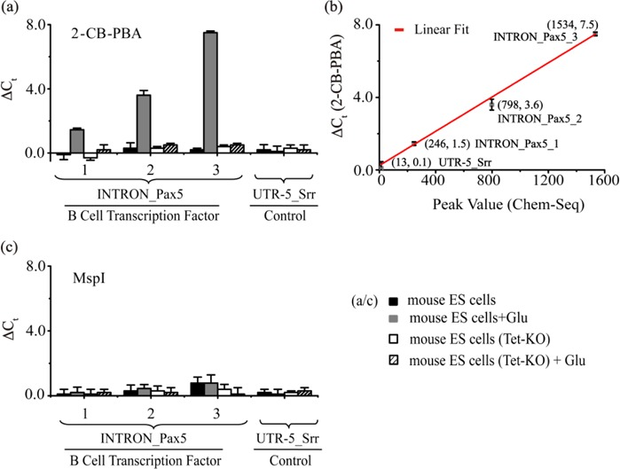 The 2-CB-PBA-mediated qPCR assay for fragment-specific detection of 5hmC in the indicated INTRON- Pax5 regions of genomic DNA of mouse embryonic stem (ES) cells. ( a ) The Δ C t values obtained by the 2-CB-PBA-mediated qPCR assay. ( b ) The correlation of the 2-CB-PBA-mediated qPCR with Chem-Seq analysis of 5hmC. ( c ) The Δ C t values obtained by the MspI-qPCR assay. The primers designed for amplification of the target DNA regions were listed in Supplementary Table S2. UTR-5_ Srr was included as inner control from qPCR analysis. Error bars represent the standard deviation from the mean of at least three experiments. 'Glu' indicates the glucosylation of DNA by β-GT. Tet-KO indicates the double knockout of Tet1 and Tet2.
