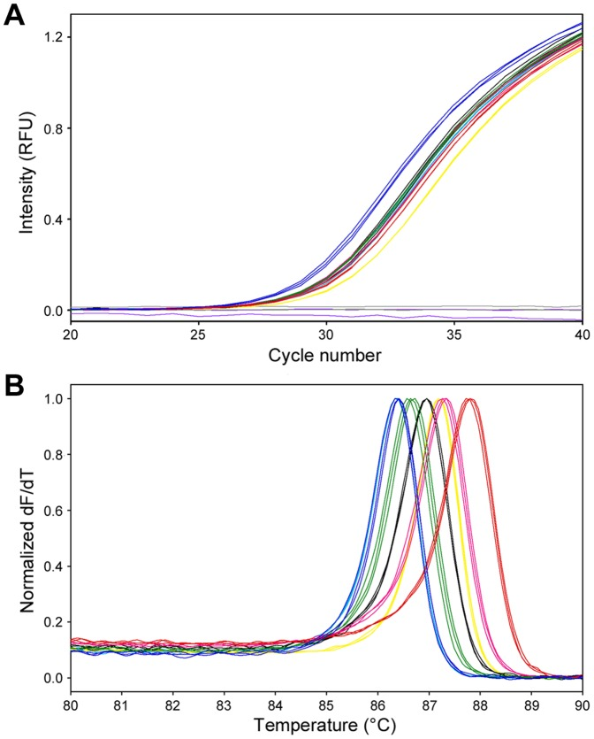 SYBR Green I assay followed by melting curve analysis of 7 (A) Amplification kinetics results with 1000 copies of the 7 MNV plasmids, and (B) melting curve analysis results of 7 MNV PCR products. 1.CW1, blue; Apo960, red; Berlin/04/06, green; KHU-1, magenta; S7-PP3, black; TW2006, yellow; TW2007, cyan. As negative controls, pUC19 DNA (purple) and molecular grade water (gray) are shown in A. All samples were tested in triplicates.