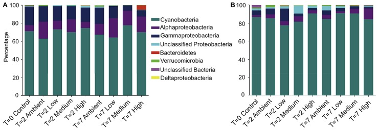 Relative abundance of each bacterial phyla, plus class for Proteobacteria , within each treatment for (A) DNA-derived and (B) RNA-derived sequences . The three replicate individuals per treatment were averaged. For clarity, only the 50 most abundant operational taxonomic units (OTUs) were used to create the graphs.