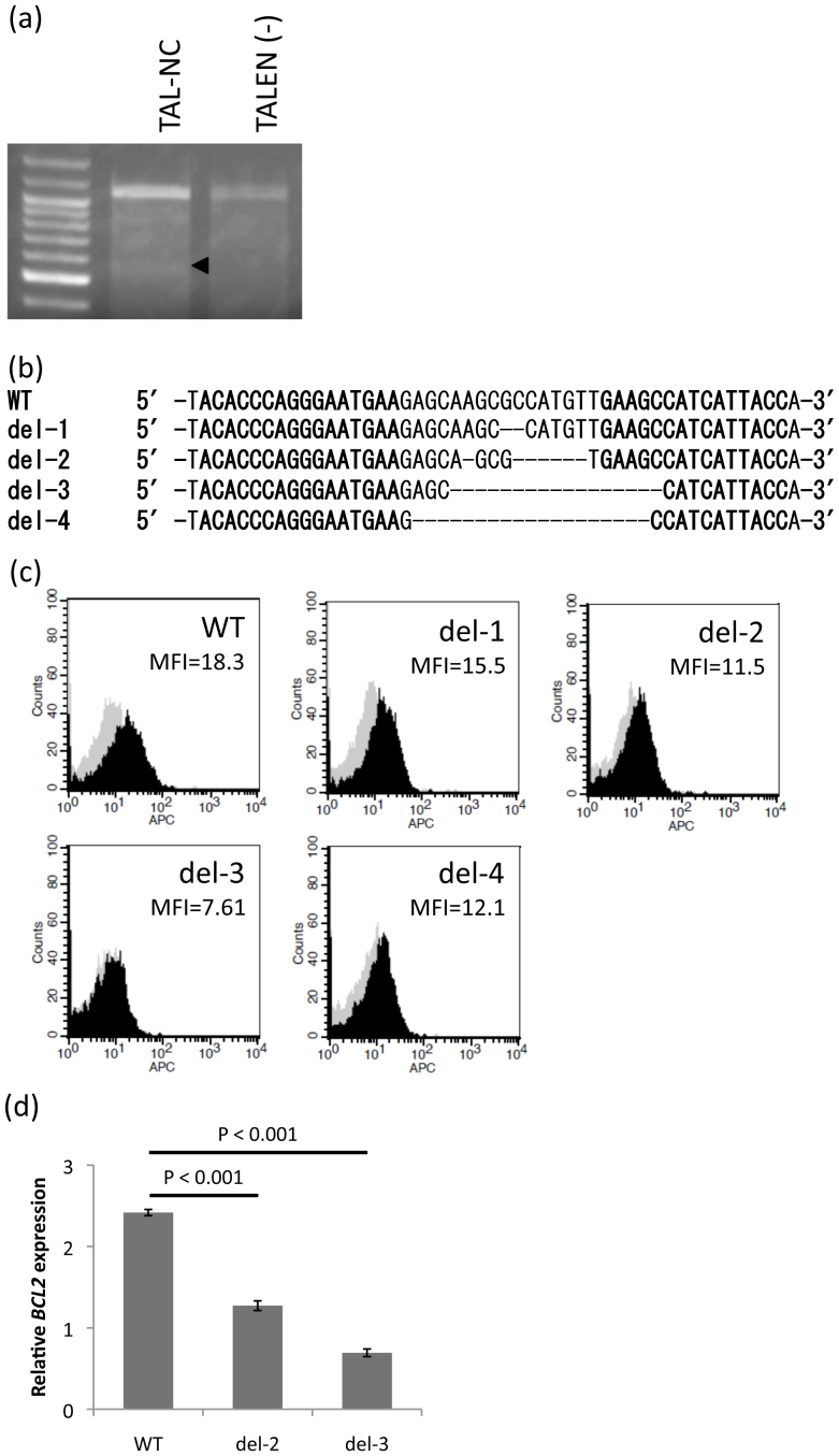 TALEN-induced genomic mutation in IL2RG . (a) T7 endonuclease I assay using TALENs for <t>Jurkat</t> cells. Jurkat cells were transfected with TALEN expression vectors by electroporation. After 5 days culture, genomic <t>DNA</t> was isolated and the TALEN target locus was amplified by PCR. A T7 endonuclease I assay was performed using purified PCR products. The arrowhead indicates the expected position of the digested products in the agarose gel. (b) Sequencing results of the PCR fragments, revealing different mutations in the TALEN target site. Jurkat cells were cultured for 5 days after electroporation, and cloning was performed by limiting dilution. Genomic DNA was isolated from cloned Jurkat cells and DNA sequencing was performed. Sequences for wild-type (WT) and deletion mutants (del1–4) are shown. (c) Functional analysis of genome-modified Jurkat cells. The level of IL2RG expression in genome-modified Jurkat cells was analyzed using flow cytometry. Cells were incubated with APC-conjugated-anti-hCD132 antibody for IL2RG and APC-IgG2b antibody as an isotype control. MFI, Mean Fluorescence Intensity of CD132. (d) qPCR analysis of BCL2 . BCL2 expression was examined 48 hr after the PMA and ionomycin stimulation in the presence of exogenous IL-2. Data are shown as mean ± SD (n = 3).