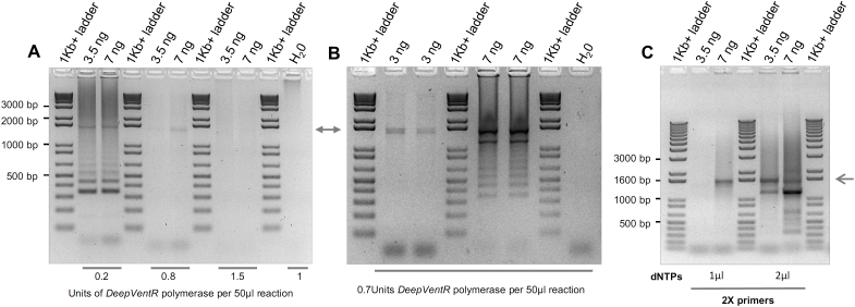 Testing a DNA polymerase with high strand displacement activity in the amplification of the 12 TALE DNA-binding repeats in pTAL2 vector. Various parameters influencing the activity and the outcome of the PCR amplification of the Deep-VentR DNA polymerase are shown. The arrows indicate the expected size of the amplification products. PCR conditions are given in the supplementary material .
