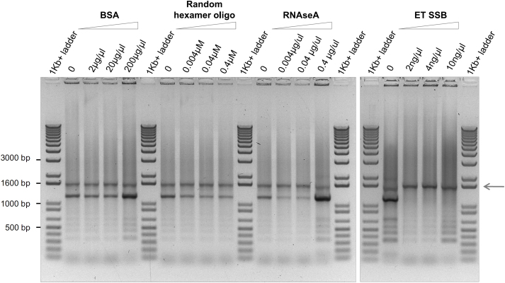 ET SSB slightly improves the performance of Deep-VentR DNA polymerase in amplifying TALE DNA-binding repeats. The arrow indicates the expected size of amplification products. ET SSB, a heat resistant single strand DNA-binding protein isolated from thermophilic bacteria (NE Biolabs). PCR conditions are given in the supplementary material .
