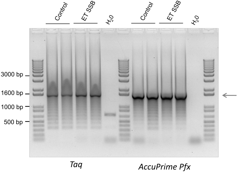 Single strand binding protein, ET SSB, only has a minor effect on the reduction of artifacts. <t>Taq</t> (NE Biolabs) and AccuPrime Pfx (Life Technologies) <t>DNA</t> polymerases were used in amplification of TALE DNA repeats. The arrows indicate the expected size of the amplification products. PCR conditions are given in the supplementary material .