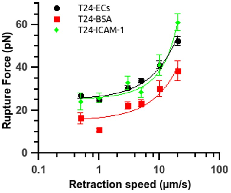 Control experiments for T24 cells interacting with recombinant ICAM-1 or BSA coated surfaces. Rupture force vs. retraction speed for T24 cells interacting either with a coated substrate or with ECs (circle). The substrate is coated with BSA 100 µg/ml (square) or recombinant ICAM-1 25 µg/ml (diamond). Data are plotted as mean ± standard error of the mean. The line is just a guide for the eye.