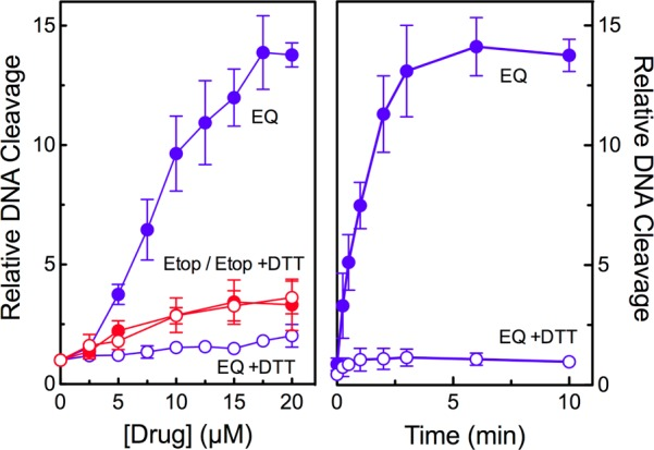 Etoposide quinone enhances DNA cleavage mediated by human topoisomerase IIβ. DNA cleavage was carried out in the presence of etoposide (Etop, red) or etoposide quinone (EQ, blue) in the absence (closed circles) or presence (open circles) of 50 μM dithiothreitol (DTT). The left panel shows drug titrations, and the right panel shows a time course for DNA cleavage in the presence of 15 μM etoposide quinone. Error bars represent the standard deviation of three or more independent experiments.
