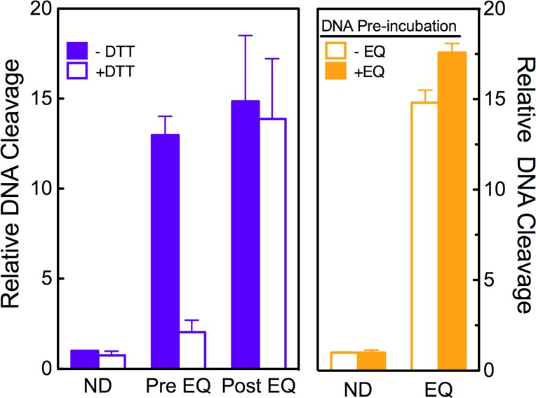 Etoposide quinone is a covalent poison of topoisomerase IIβ. In the left panel, etoposide quinone enhancement of DNA cleavage is not reversed by the addition of reducing agents after DNA cleavage complexes have been established. DNA cleavage reactions were carried out in the absence (blue bars) or presence (open blue bars) of DTT. Reaction mixtures contained no drug (ND) or 30 μM etoposide quinone in mixtures that included DTT at the time of DNA cleavage (Pre EQ) or DTT that was added (for an additional 6 min) after cleavage complexes were formed (Post EQ). In the right panel, etoposide quinone does not form DNA lesions that poison topoisomerase IIβ. DNA was incubated without (−EQ, open orange bars) or with (+EQ, orange bars) 30 μM etoposide quinone. DNA was purified from free drug and used in DNA cleavage reactions mediated by topoisomerase IIβ. DNA cleavage reactions were performed in the absence of drug (ND) or in the presence of 30 μM etoposide quinone (EQ). In all cases, error bars represent the standard deviation of three independent experiments.