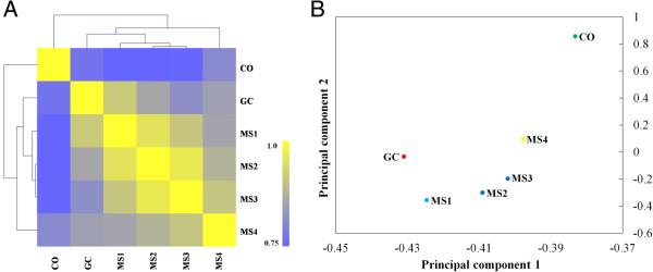 Correlation in expression patterns among the six RNA-sequenced libraries. A . Heatmap of the Pearson correlation of RNA-Seq samples according to gene expression level. Clustering was analyzed based on the expression data of 10,158 genes. B . Principal component analysis (PCA) of the transcriptomes during microsclerotia formation and germinating conidia. For the principal components 1 and 2, eigenvalues are 86.2% and 6.7%, respectively. The analysis was performed by the MultiExperiment Viewer using the expression data from 10,158 genes.
