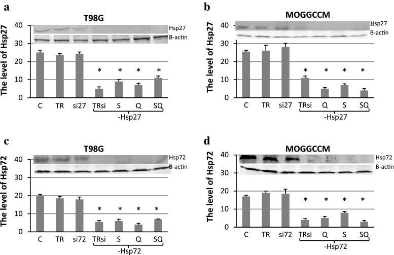 The level of Hsp27 and Hsp72 expression in T98G ( a , c ) and MOGGCCM ( b , d ) cells after transfection with specific anti-Hsp27 ( a , b ) or anti-Hsp72 ( c , d ) siRNA (si27 and si72, respectively) and subsequent quercetin (Q) and sorafenib (S) treatment, estimated by immunoblotting. T98G cells were incubated with 50 μM of quercetin and 0.75 μM sorafenib, while MOGGCCM cells with 30 μM (Q30) of quercetin and 0.75 μM of sorafenib. Protein level was normalised according to β-actin expression. C control, TR transfection reagent, TRsi transfection reagent with specific siRNA, SQ simultaneous quercetin and sorafenib treatment, * P